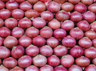 Fresh & Export quality onian available direct farm